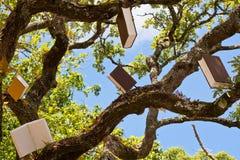 Дерево знания Стоковая Фотография