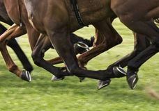 Гонка лошади Стоковое фото RF