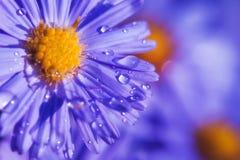 Пурпуровый цветок Стоковые Фото