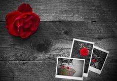 在一个土气背景的红色玫瑰 库存照片