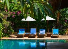 在热带手段的游泳池 免版税库存图片