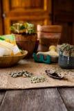 Σπόροι για το φυτό Στοκ Εικόνες