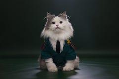 作为将军穿戴的猫 免版税库存照片