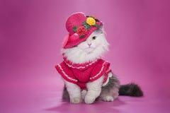 在一件桃红色礼服的猫 免版税库存照片