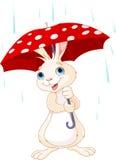 兔宝宝在伞下 免版税库存图片