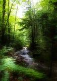 溪森林 免版税图库摄影