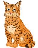 美洲野猫 免版税库存照片