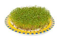 Кресс-салат Стоковое фото RF