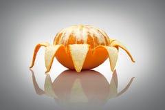 一只快乐的蜘蛛。 免版税库存照片
