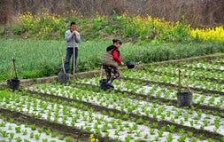 彭州,中国: 运作在域的农厂夫妇 库存照片