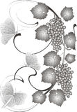 виноградины бабочек Стоковая Фотография