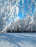 霜灰白冬天 库存图片