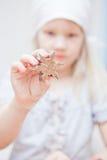 Διαμορφωμένο αστέρι κομμάτι της ζύμης μελοψωμάτων Στοκ φωτογραφία με δικαίωμα ελεύθερης χρήσης