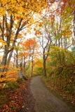 路径在秋天森林里 免版税库存图片