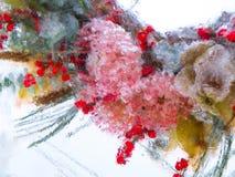 在冰的被弄脏的花 免版税库存照片
