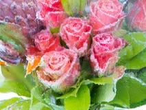 在冰的被弄脏的花 库存照片