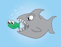 吃鱼的鱼 免版税库存图片