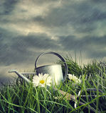 与花的喷壶在一个夏天下雨 库存照片