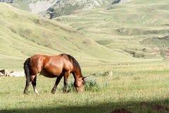 Лошадь пася Стоковое Изображение RF