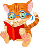 逗人喜爱的小猫教育 免版税库存照片