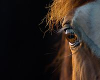 άλογο κινηματογραφήσεων σε πρώτο πλάνο Στοκ Φωτογραφία