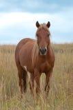 在高草的马 免版税库存图片
