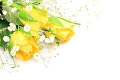 黄色玫瑰和阴霾草 库存照片