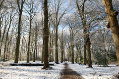 土道路在跑在树之间的公园盖用雪 库存照片