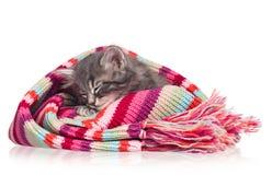 Уснувший котенок Стоковые Изображения