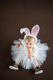 逗人喜爱的小的兔宝宝 免版税库存照片