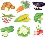 Комплект овощей фото-реалистический Стоковые Фотографии RF