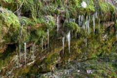 青苔和冰周期。 免版税库存照片