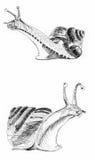 蜗牛剪影例证绘画 库存图片