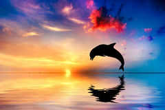 美丽的海洋和日落,海豚跳跃 免版税图库摄影
