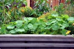与花和菜植物的被上升的庭院床 免版税库存照片