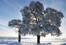 Δέντρο χειμερινού έλατου στο υπόβαθρο του μπλε ουρανού Στοκ φωτογραφία με δικαίωμα ελεύθερης χρήσης