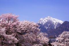 樱桃树和雪山 库存图片