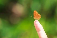 蝴蝶在手边 免版税库存图片