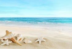 与壳的风景在热带海滩 免版税库存图片