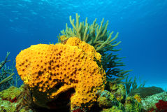 Κοράλλια ενάντια στην επιφάνεια Στοκ Φωτογραφίες