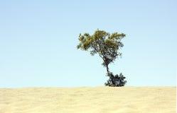 偏僻的树 库存图片