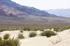 平安的沙漠风景 免版税图库摄影