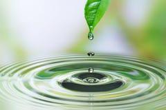 Падение воды на лист Стоковое Изображение RF