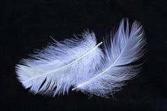 蓝色接近的羽毛 免版税图库摄影