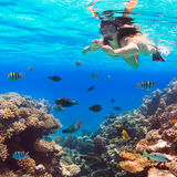 潜航在红海的美丽的妇女 免版税库存照片