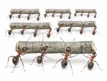 蚂蚁与日志一起使用,配合概念 免版税库存照片