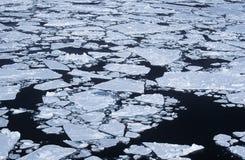 南极洲威德尔海冰流程 免版税图库摄影