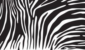 斑马皮肤背景 免版税图库摄影