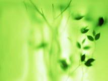 Αφηρημένο πράσινο φυσικό υπόβαθρο Στοκ Φωτογραφίες