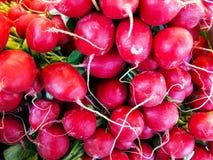 Φρέσκα κόκκινα ραδίκια Στοκ εικόνες με δικαίωμα ελεύθερης χρήσης